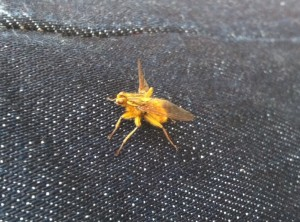 A strange insect on my leg