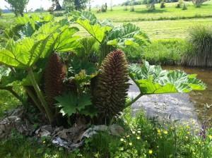 A strange plant at the Parc Botanique