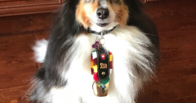 Dog cowbell